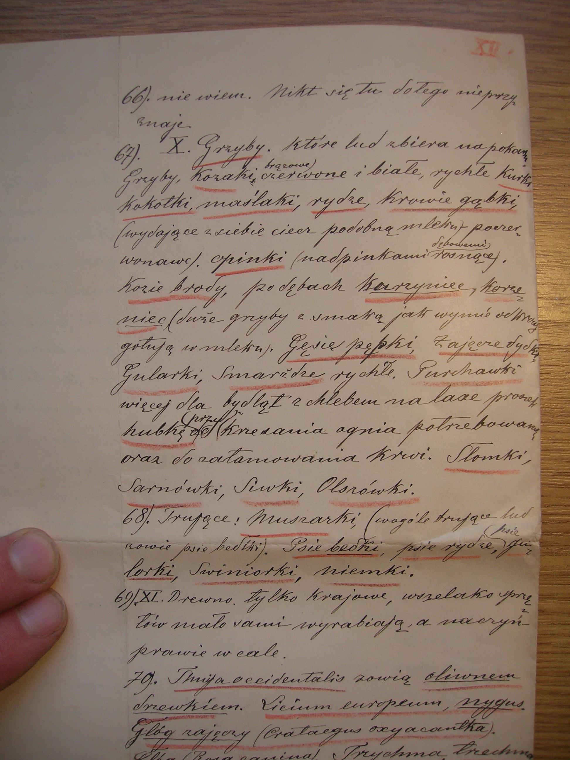 Użytkowanie grzybów na XIX wiecznych ziemiach polskich