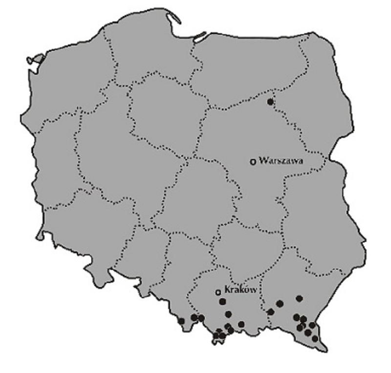 paprotka mapa