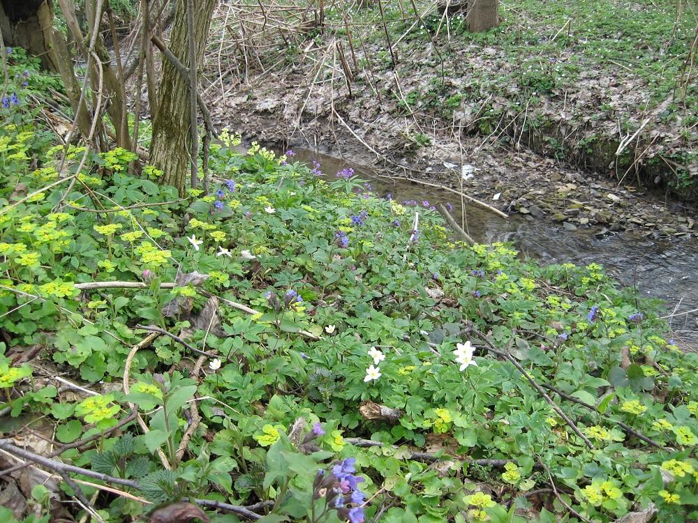 wiosenne przy potoku