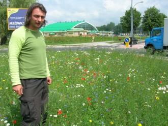 kwiaty polne rondo_lipiec
