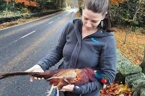 Roadkill – zwierzę które zjesz z drogi