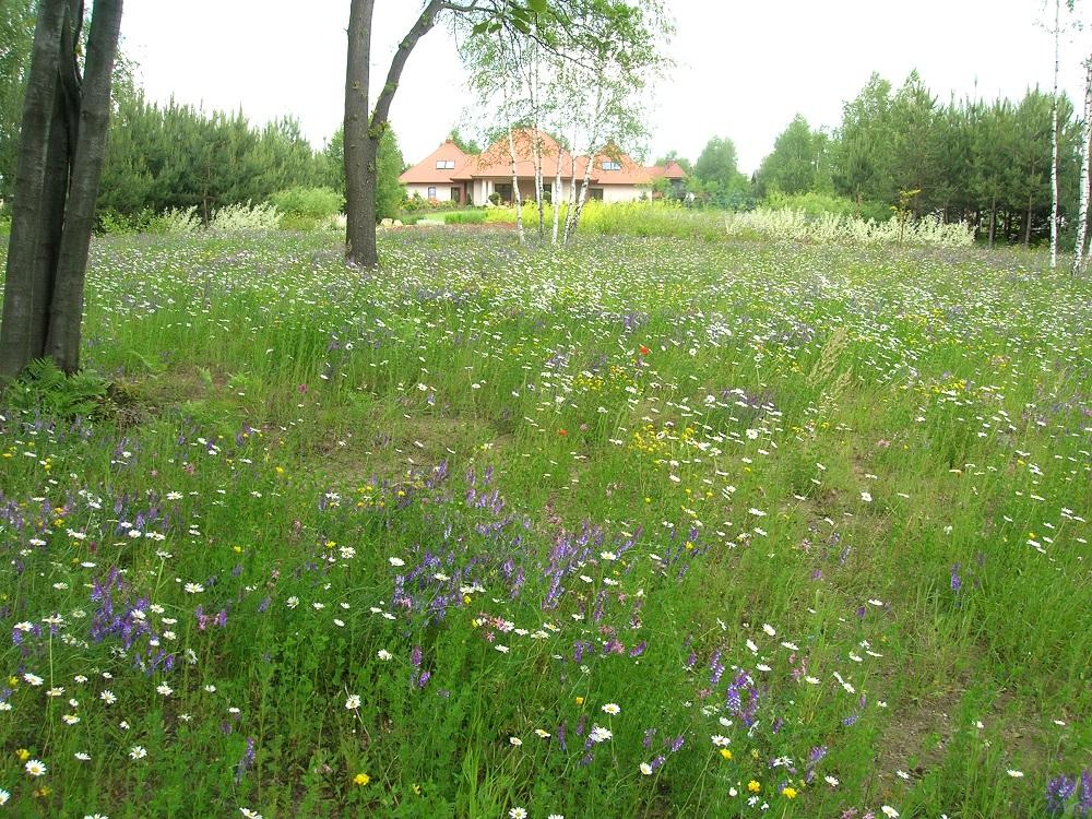 poslka łąka kwietna głogów mlp 2005 DSCN0806