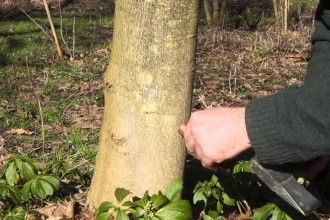 Prawie wszystko o spuszczaniu soków drzew