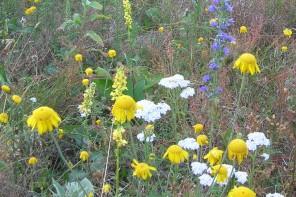Czy można mieszać różne mieszanki nasion łąk kwietnych?