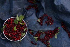 Jak zbierać owoce derenia jadalnego? Jeden prosty patent