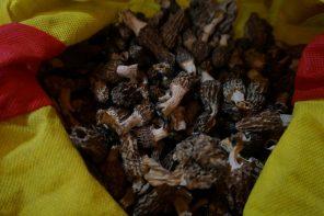 Które grzyby nadają się do suszenia?