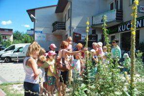 Łąki kwietne przy rzeszowskich i podrzeszowskich szkołach