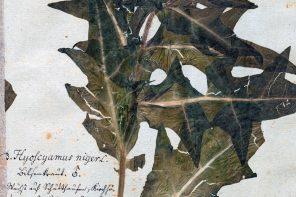 """""""Rośliny trujące Pomorza"""" – ciekawostka bibliofilska"""