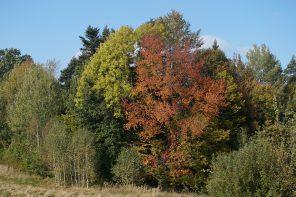 Las iglasty czy liściasty – który posadzić?