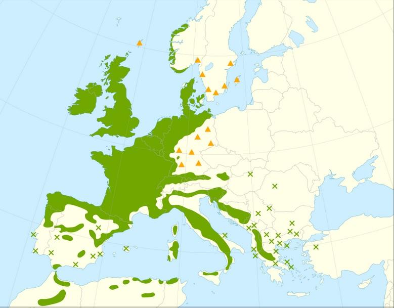 Rozmieszczenie naturalnych stanowisk ostrokrzewu kolczastego w Europie Giovanni Caudullo - Guerrero Hue, N., Caudullo, G., de Rigo, D., 2016. Ilex aquifolium in Europe: distribution, habitat, usage and threats. In: San-Miguel-Ayanz, J., de Rigo, D., Caudullo, G., Houston Durrant, T., Mauri, A. (Eds.), European Atlas of Forest Tree Species. Publication Office of European Union, Luxembourg. CC BY 4.0