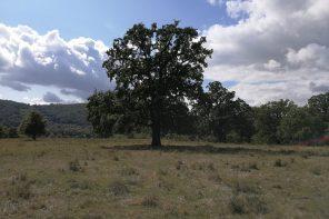 Ochronić zadrzewione pastwiska