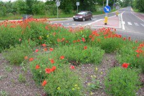 Dlaczego w mieście jest mniej gatunków dzikich roślin?