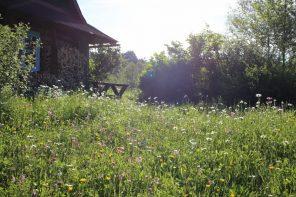 Łąka kwietna w warunkach zmian klimatu