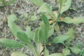 Jak gęsto siać łąkę kwietną?