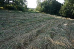 Przytłoczenie – wskazówki dla super zagonionych właścicieli dużych i zarośniętych ogrodów