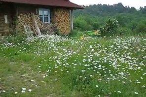 Żyzność i łąka kwietna