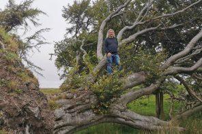 Działanie i niedziałanie – ogród i życie