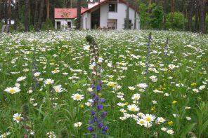 Jak wysoka powinna być łąka kwietna?